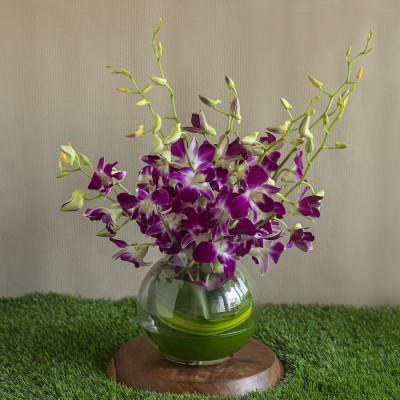 Orchids in a Glass Pot