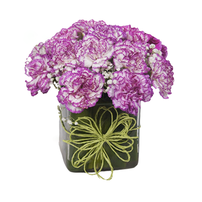 shaded pink carnations